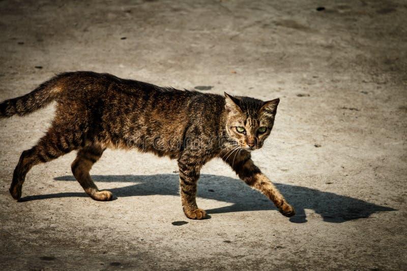 De dakloze kat loopt op straat royalty-vrije stock foto's