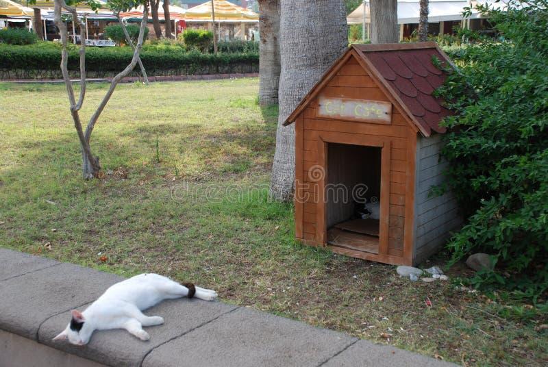 De dakloze katten rusten onder de heldere zon in de stad van Kemer in Turkije royalty-vrije stock foto