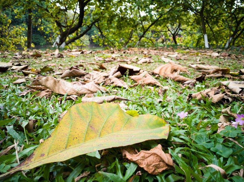De dalende bladeren op het gazon in de lente royalty-vrije stock afbeelding