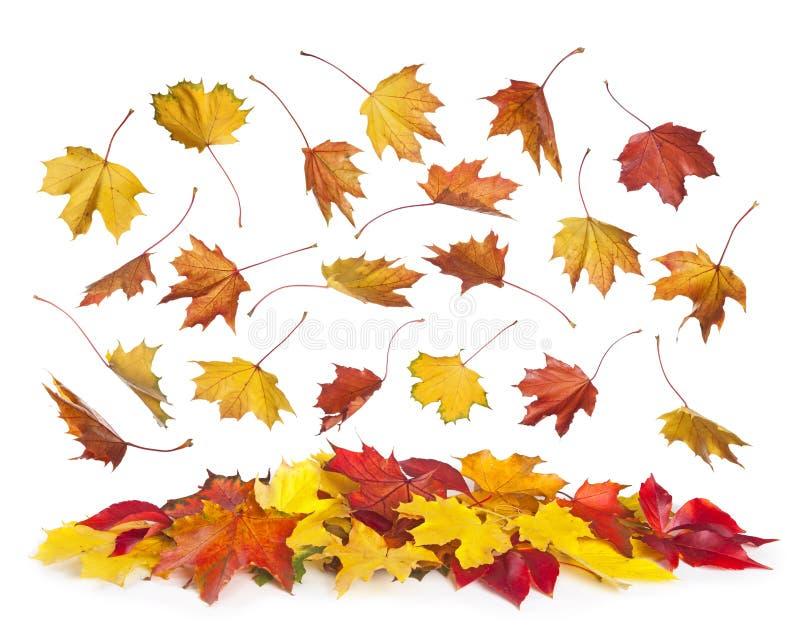 De dalende bladeren van de herfst stock fotografie