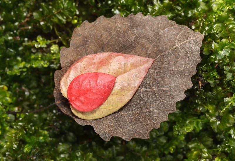 De daling abscised bladerenverscheidenheid royalty-vrije stock foto's