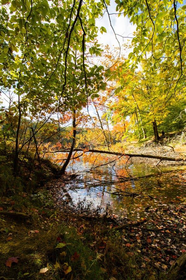 De daling lonkt Meer, het Bruine Park van de Staat van de Provincie, Indiana stock foto's