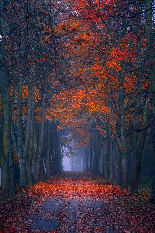 De daling van de herfst geel blad op boomachtergrond Mistige ochtend in de esdoorn bos Trillende kleuren stock afbeelding