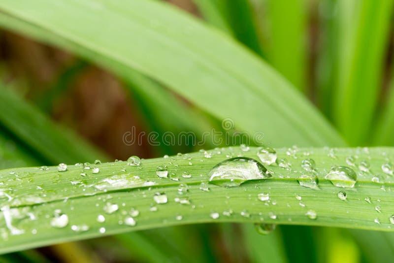 De daling van het close-upwater op groen blad stock fotografie