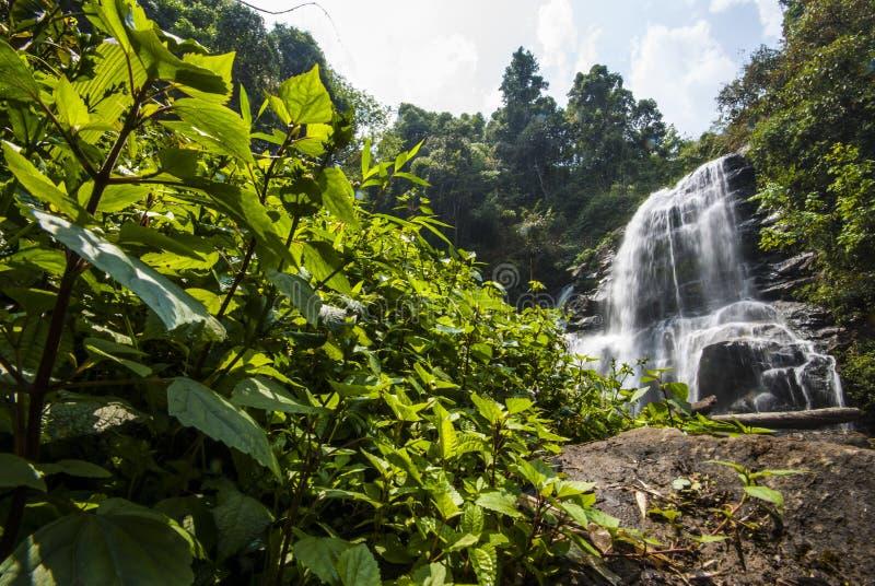 De daling van het water in lentetijd in diepe regenwoudwildernis die wordt gevestigd. royalty-vrije stock fotografie