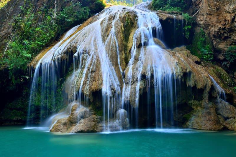 De daling van het water in lentetijd in diepe regenwoudwildernis die wordt gevestigd stock fotografie