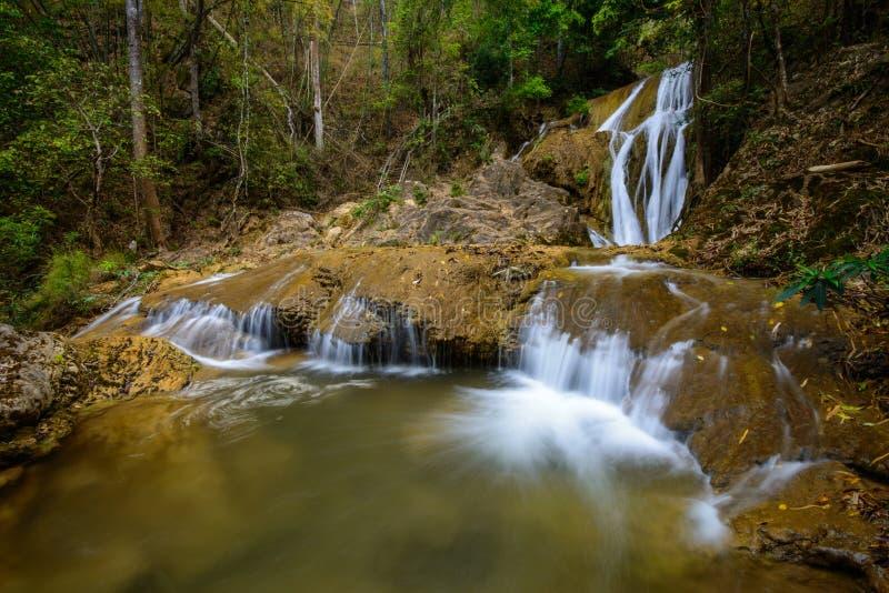 De daling van het water in lentetijd in diepe regenwoudwildernis die wordt gevestigd stock afbeeldingen