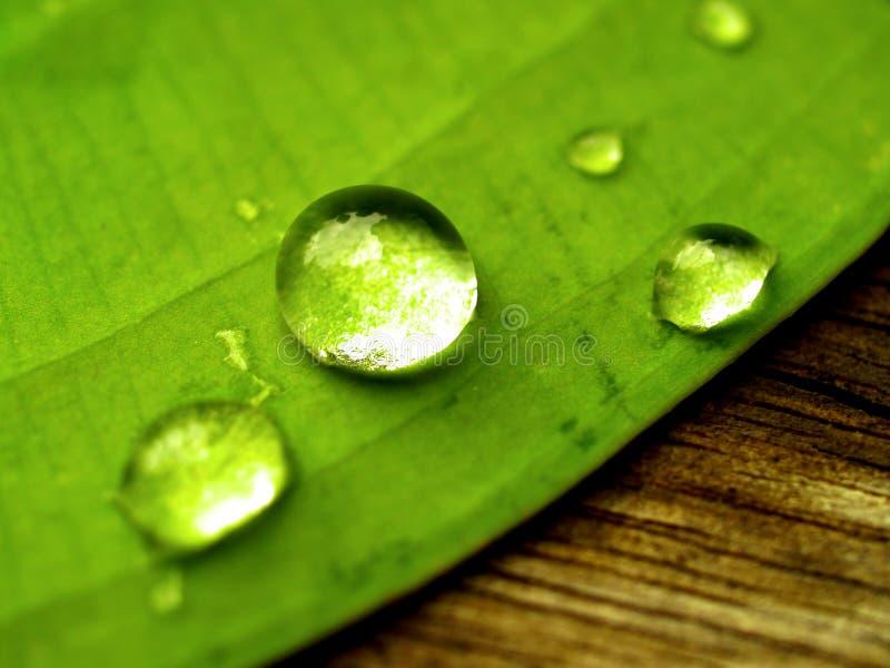 De daling van het water op blad royalty-vrije stock afbeeldingen