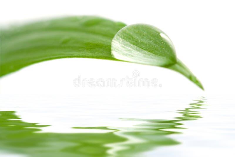 De daling van het water op een blad dat in water nadenkt royalty-vrije stock fotografie