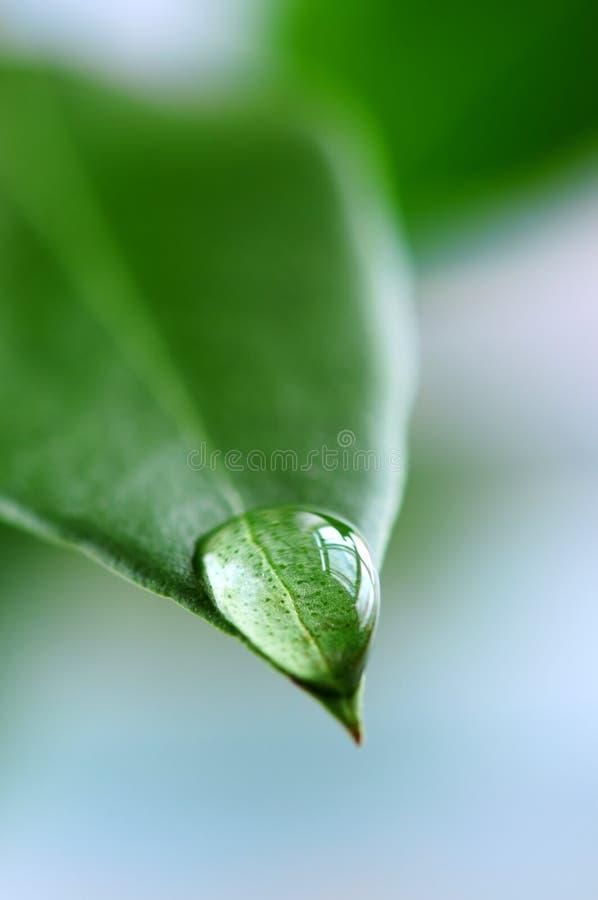 De daling van het water op groen blad stock afbeeldingen