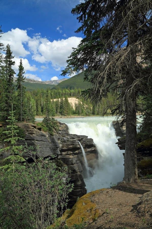 De Dalingen van Athabasca - het Nationale Park van de Jaspis royalty-vrije stock fotografie