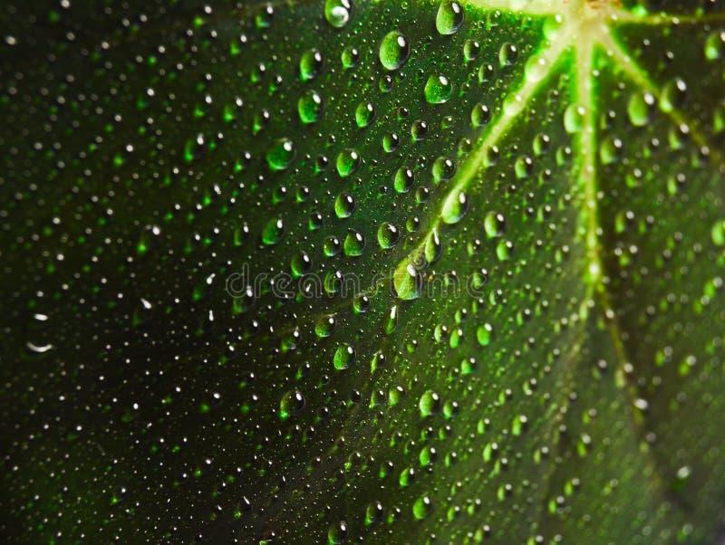 De dalingen van dauw op een groen blad sluiten omhoog stock afbeeldingen
