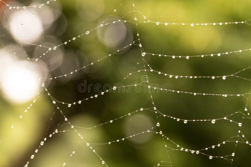 De dalingen van de dauw op een spiderweb stock foto