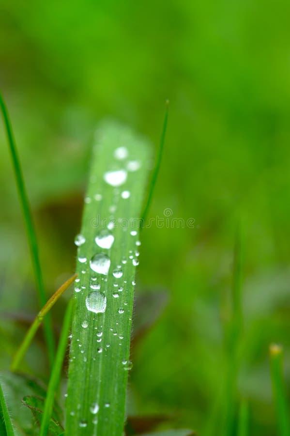 De dalingen van de regen in het gras stock foto's