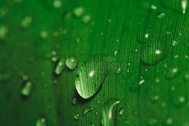 De dalingen van de regen op banaanblad royalty-vrije stock afbeeldingen