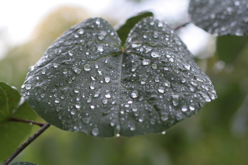 De dalingen van de regen op blad royalty-vrije stock foto's