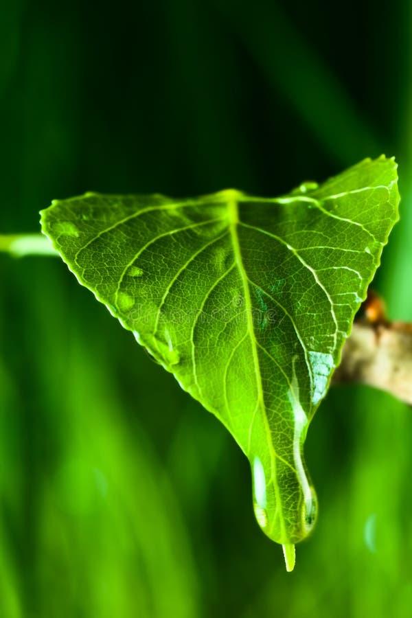 De dalingen van de regen op een groen blad royalty-vrije stock afbeeldingen