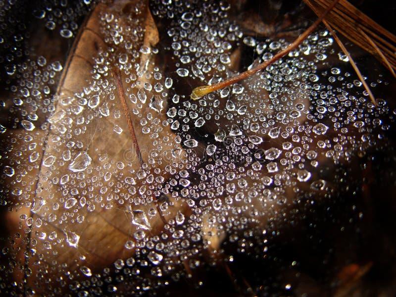 Download De Dalingen van het water stock afbeelding. Afbeelding bestaande uit spiderweb - 43223