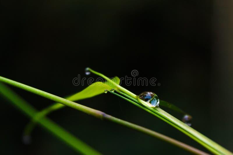 De Dalingen van het water op Bamboe royalty-vrije stock afbeelding