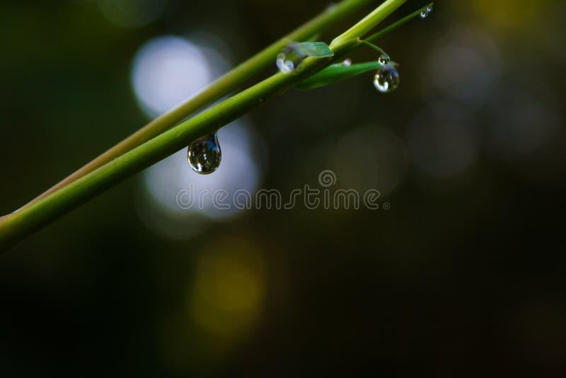 De Dalingen van het water op Bamboe stock foto's
