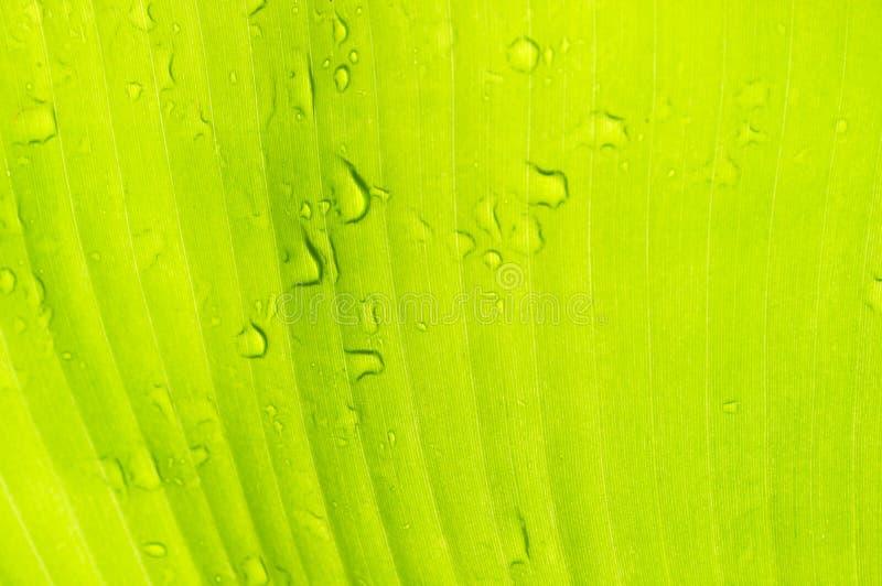 De dalingen van het water op banaanblad Mooi behang voor Desktop royalty-vrije stock afbeelding