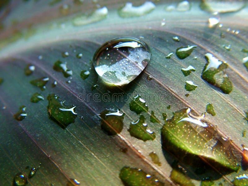 De dalingen van het water op blad royalty-vrije stock foto's