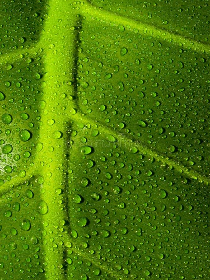De Dalingen van het water op een blad stock fotografie