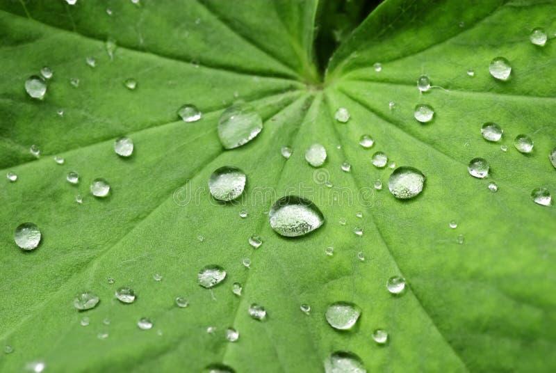 De Dalingen van het water op een groen Blad royalty-vrije stock afbeeldingen