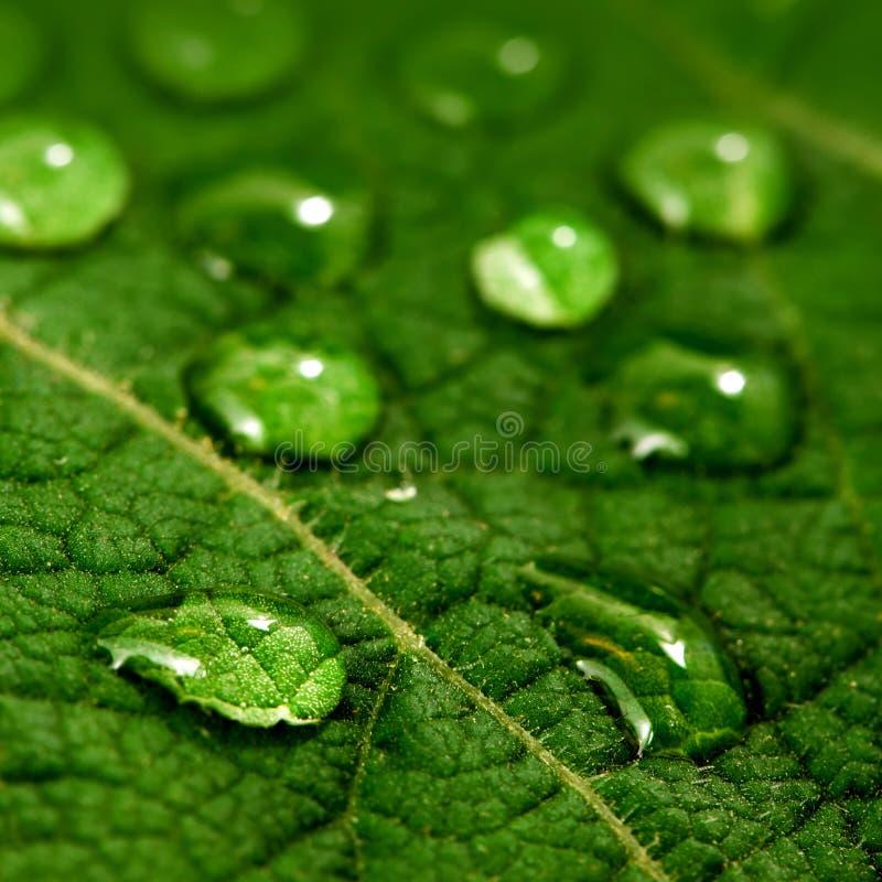De dalingen van het water op groen blad royalty-vrije stock afbeeldingen