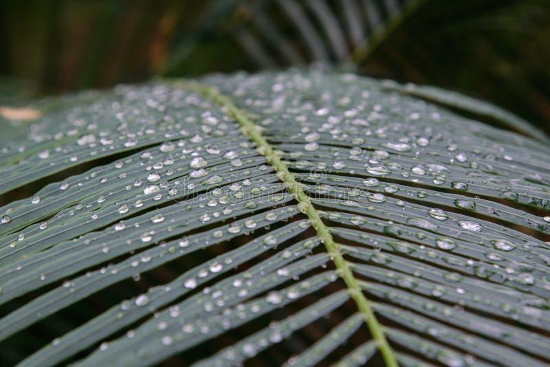 De dalingen van het water op groen blad royalty-vrije stock foto