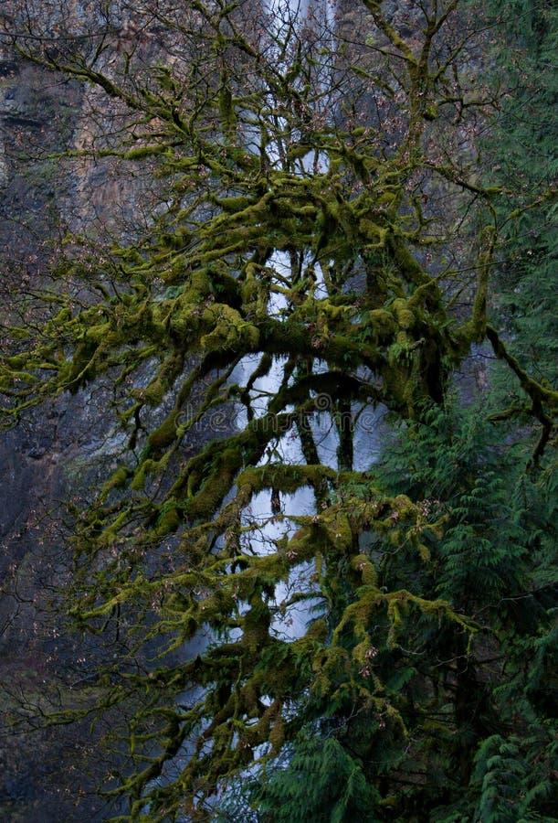 De Dalingen van Multnomah in de Winter stock afbeelding
