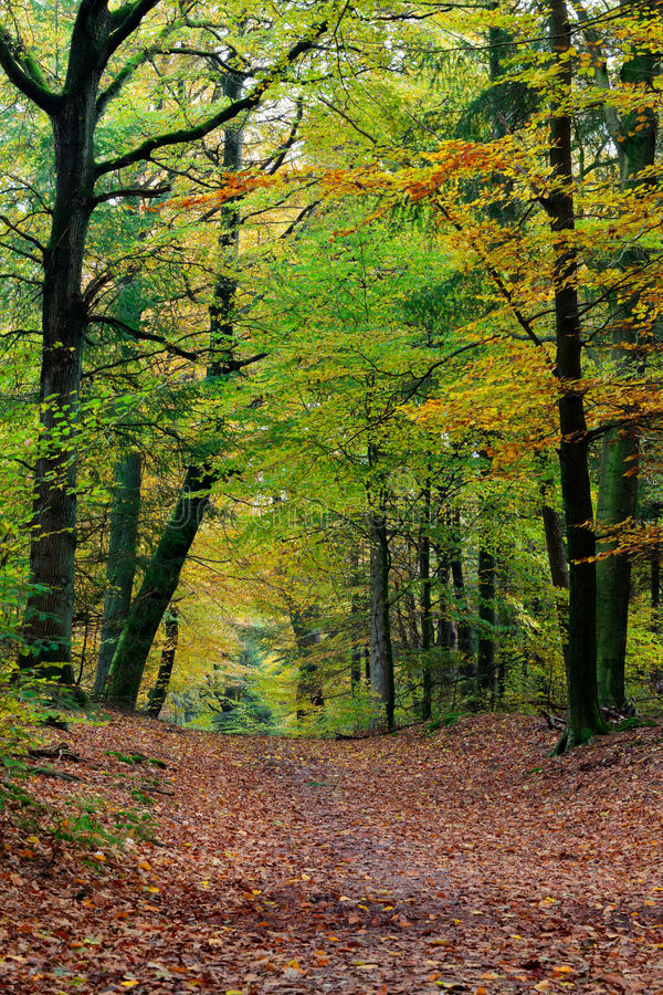 De dalings bosscène van de herfst met trillende kleuren stock fotografie