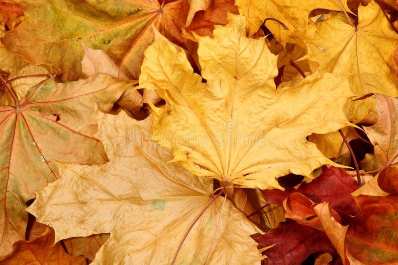 De dalingsbladeren van de herfst royalty-vrije stock foto's