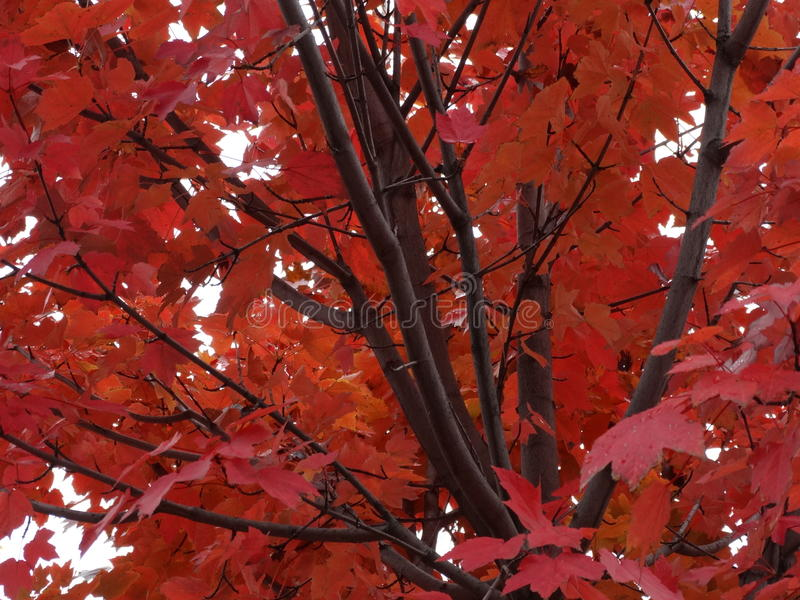 De dalingsboom verlaat de Kleuren van de Bladwinter royalty-vrije stock foto