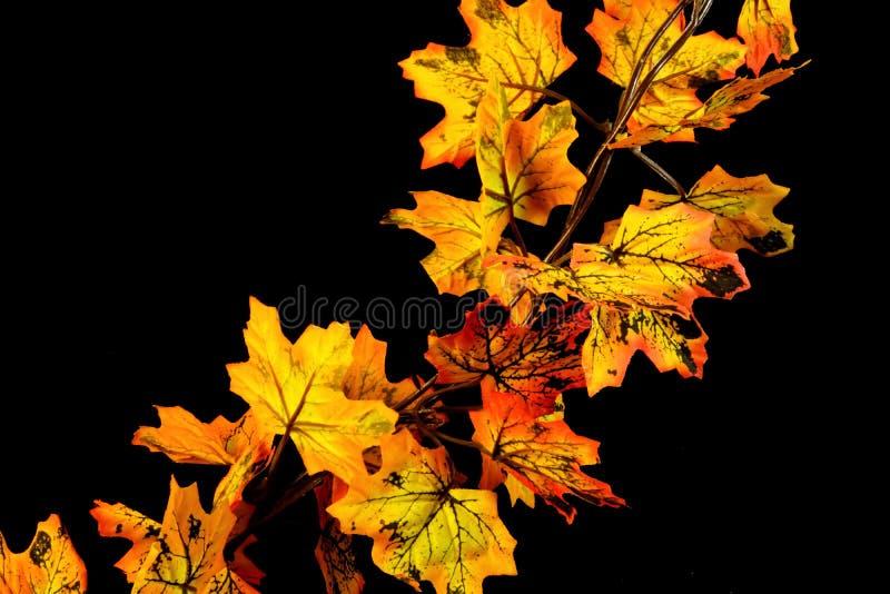 De dalingsesdoorn van het de herfstblad, kleur zijn zij verschillend royalty-vrije stock afbeelding