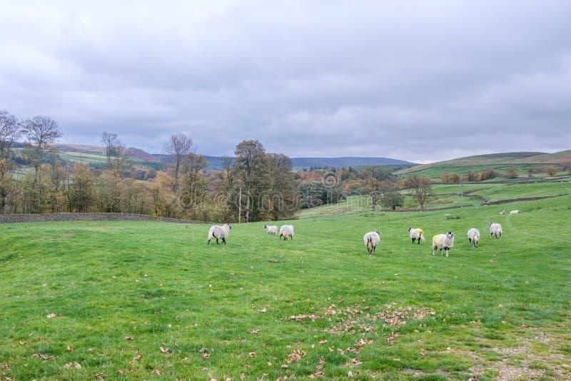 De Dallen Nationaal park van Yorkshire stock afbeelding