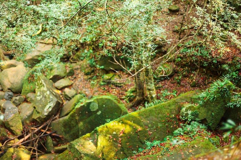De dauw op gras om in het bos te zijn stock afbeeldingen