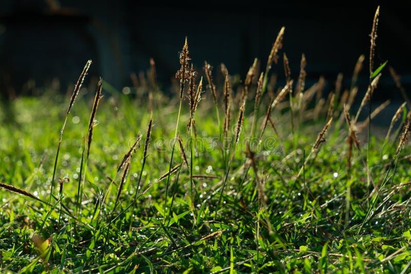 De dauw op grasgebied in de ochtend stock afbeelding