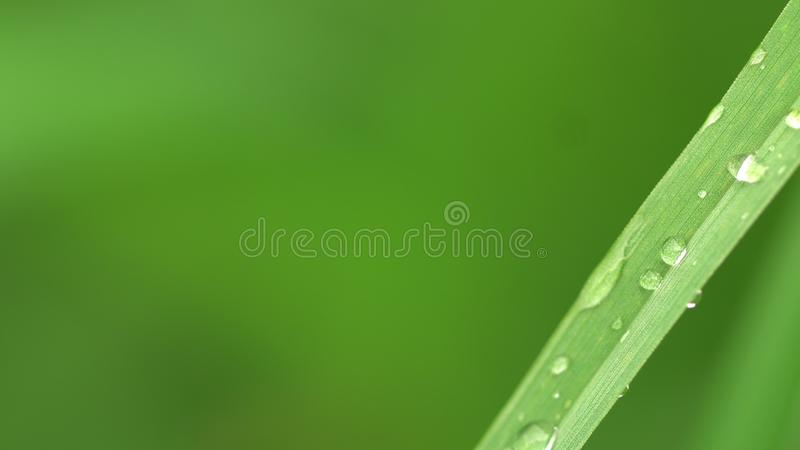 De dauw op het tuingras gloeit stock afbeelding