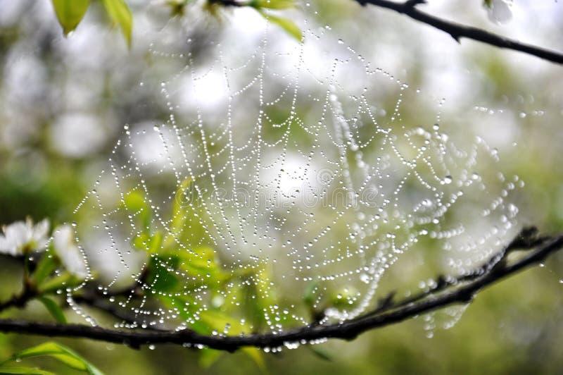 De dauw spiderweb royalty-vrije stock afbeelding