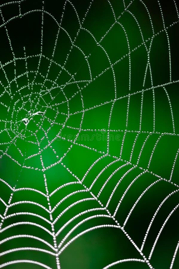 De dauw van de ochtend. Het glanzen waterdalingen op spiderweb royalty-vrije stock afbeelding