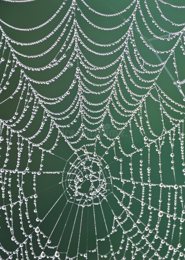 De dauw van de ochtend op een spiderweb stock foto