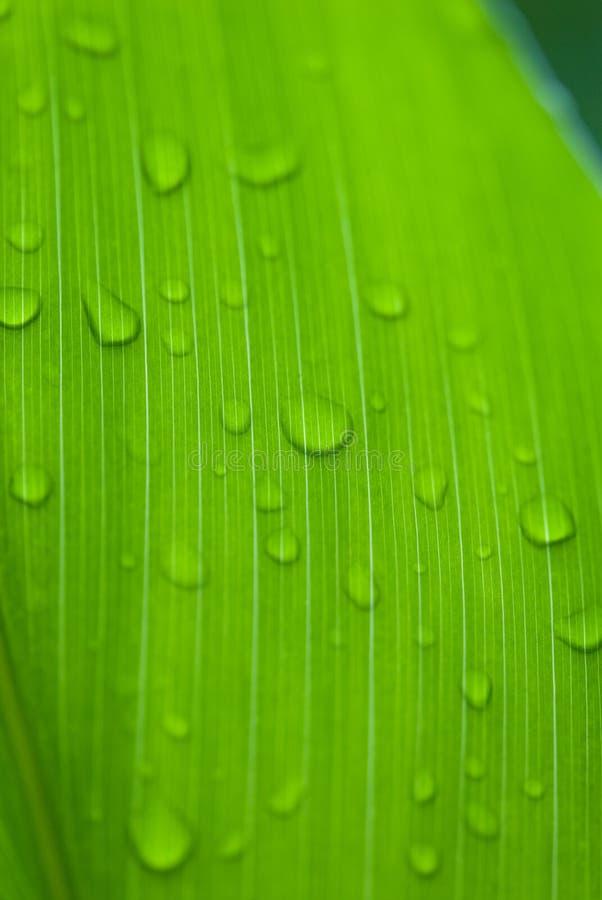 De dauw van de ochtend op tropische bloemen stock afbeeldingen