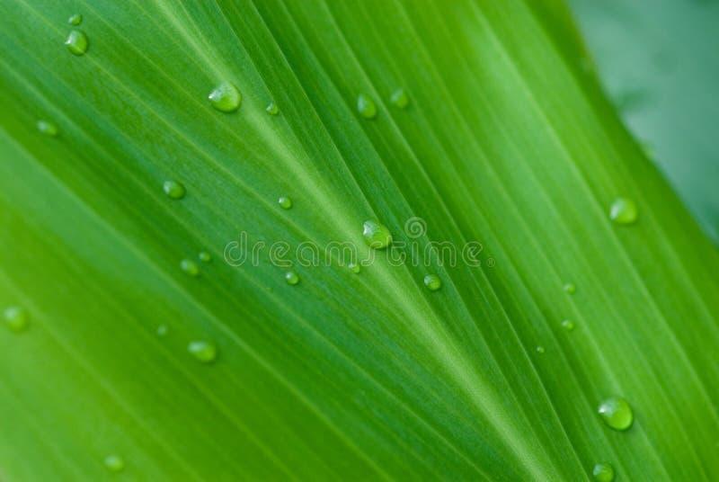 De dauw van de ochtend op tropische bloemen royalty-vrije stock afbeelding