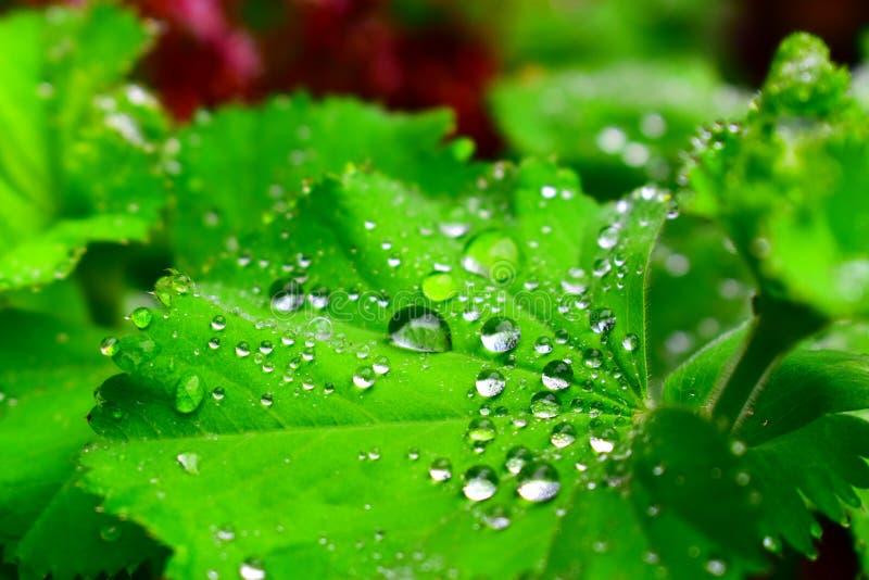 De dauw van de ochtend op een groen blad royalty-vrije stock foto