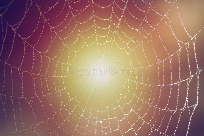 De dauw van de ochtend op spiderweb stock foto's