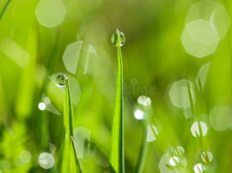 De dauwdalingen van de ochtend op het groene gras stock fotografie