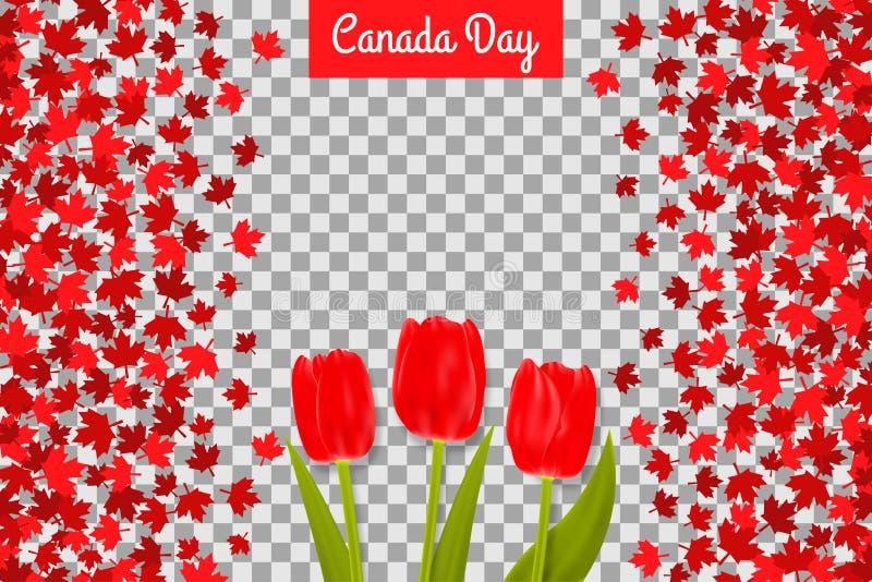 De de dagachtergrond van Canada met esdoorn doorbladert en tulpen voor eerste van Juli-viering op transparante achtergrond vector illustratie