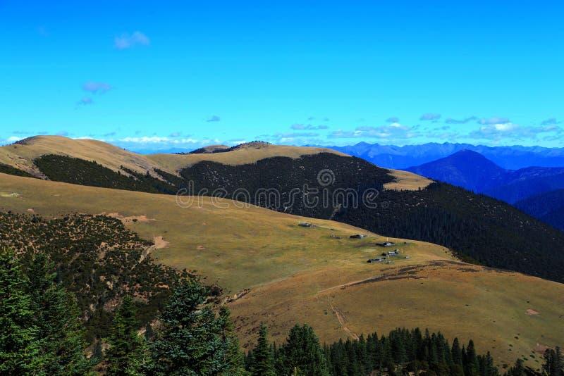 De de herfstschoonheid van het Plateau van Qinghai Tibet stock afbeeldingen