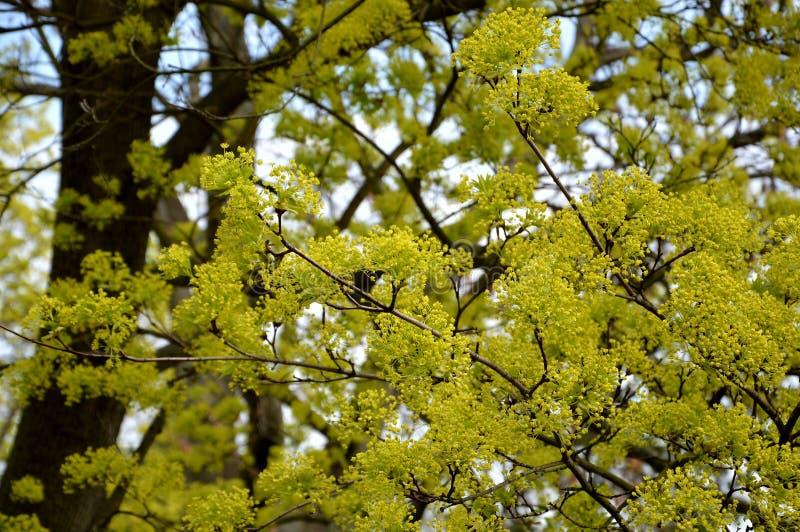 De de lentetijd… nam bladeren, natuurlijke achtergrond toe stock fotografie